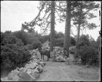 Construction workers and a horse harvesting rocks in 'Stone Alley', Mount Wilson Observatory.