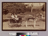 Two girls in a donkey drawn cart....