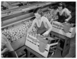 Orange packers, San Fernando Heights Citrus Packing House, Los Angeles County. 1938.