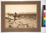 The Mojave Desert, California. Bringing in the desiccated bodies of two prospectors who perished...