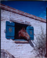 [Unidentified residence]. Horse...