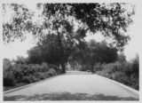 Road leading to Huntington mausoleum, circa 1928.