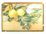 Stock label: lemons with vignette of seaside orchards.