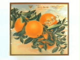 Stock label: oranges on branch with blossoms and leaves.