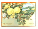 Stock label: lemons on branch with vignette of orchards and coastline.