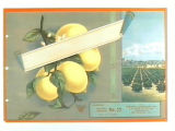 Stock label: lemons on branch, lemon groves and mountains.