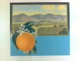 Stock label: orange on branch with framed landscape of orange groves and mountains.