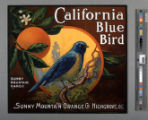 California Blue Bird.