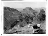 Steamboat Mountain and Saddle Canyon from Muav Saddle, Grand Canyon.